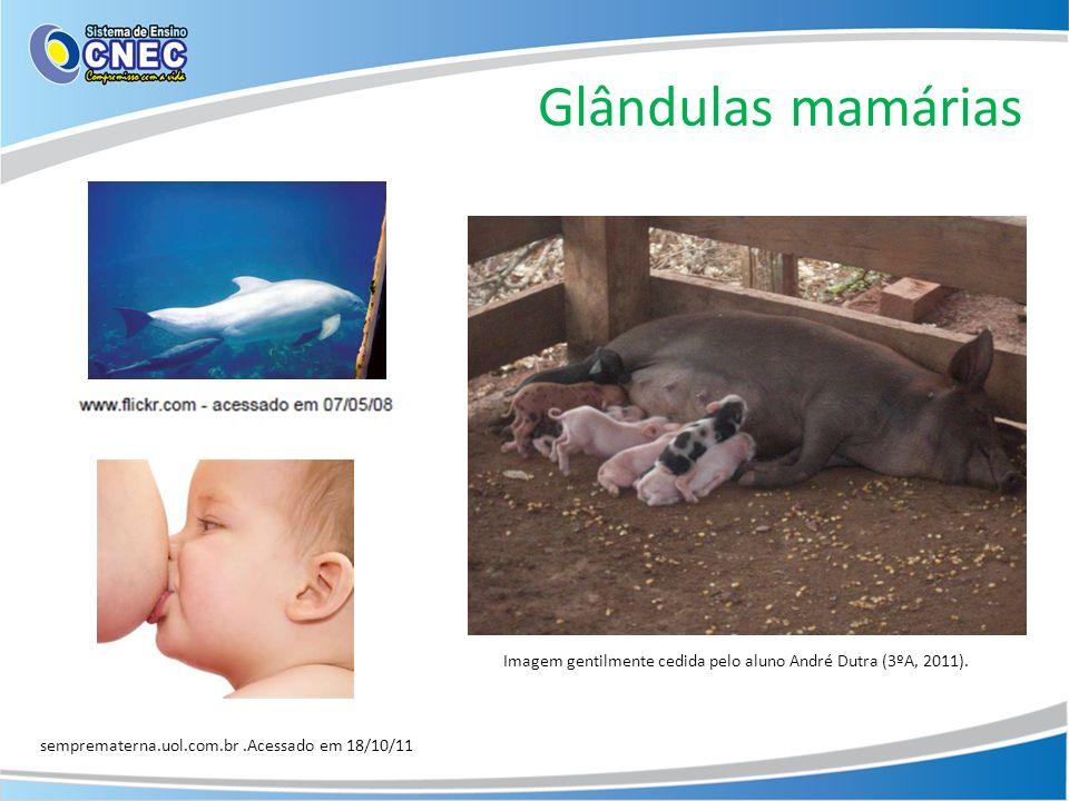 Glândulas mamárias semprematerna.uol.com.br.Acessado em 18/10/11 Imagem gentilmente cedida pelo aluno André Dutra (3ºA, 2011).