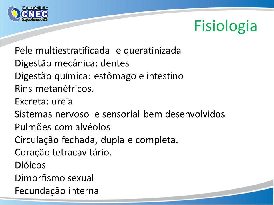 Fisiologia Pele multiestratificada e queratinizada Digestão mecânica: dentes Digestão química: estômago e intestino Rins metanéfricos. Excreta: ureia