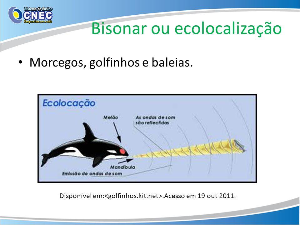 Bisonar ou ecolocalização Morcegos, golfinhos e baleias. Disponível em:.Acesso em 19 out 2011.