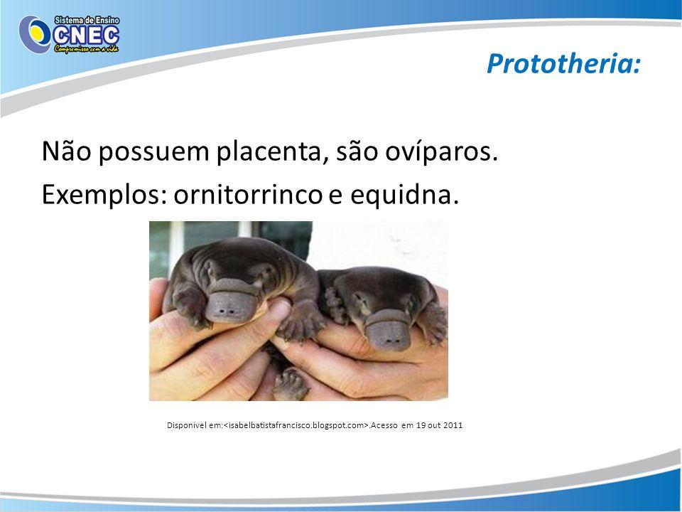 Prototheria: Não possuem placenta, são ovíparos. Exemplos: ornitorrinco e equidna. Disponível em:.Acesso em 19 out 2011