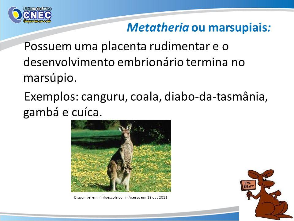 Metatheria ou marsupiais: Possuem uma placenta rudimentar e o desenvolvimento embrionário termina no marsúpio. Exemplos: canguru, coala, diabo-da-tasm