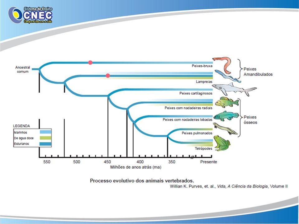 Critérios de classificação Presença ou ausência de mandíbula Sistemas fisiológicos: digestório, respiratório, circulatório, excretório, sensorial e nervoso.