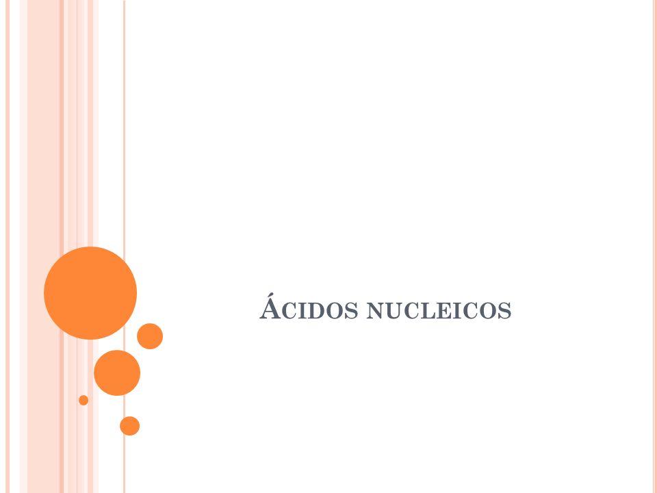 Á CIDOS NUCLEICOS