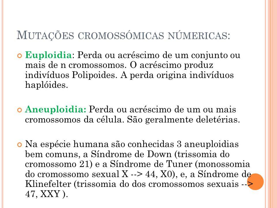 M UTAÇÕES CROMOSSÓMICAS NÚMERICAS : Euploidia : Perda ou acréscimo de um conjunto ou mais de n cromossomos.