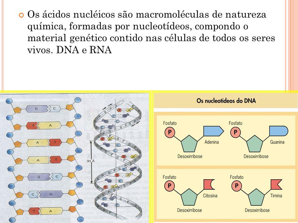 RNA Ácido ribonucléico O RNA não possui a base nitrogenada Timina, em seu lugar está presente a Uracila.