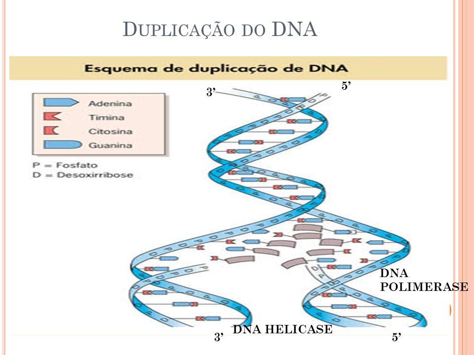 D UPLICAÇÃO DO DNA 3 DNA HELICASE 5 5 3 DNA POLIMERASE