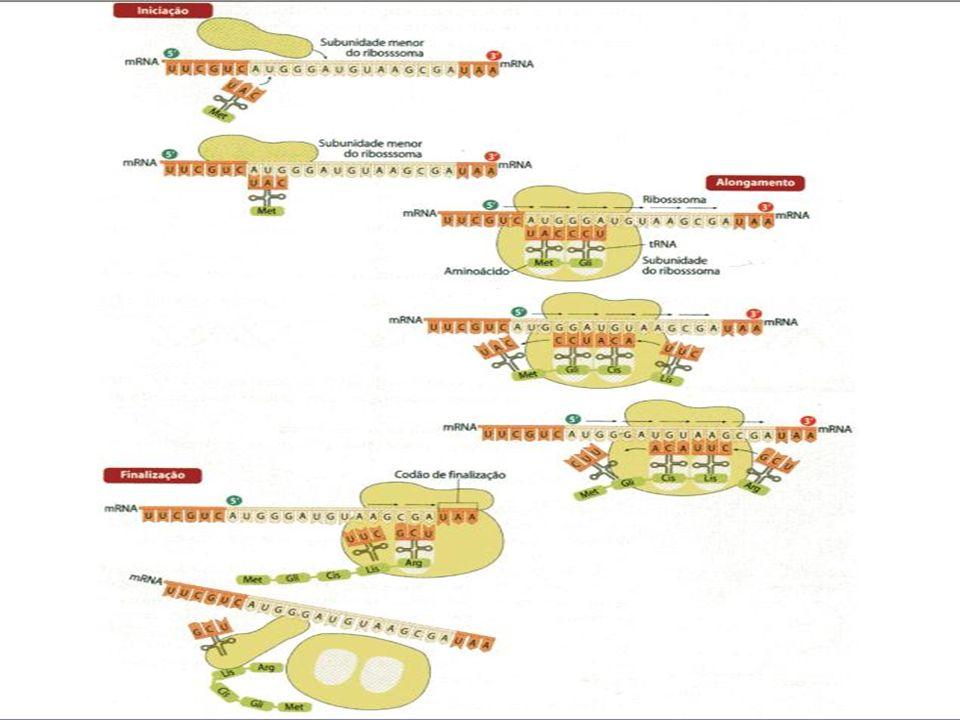 M UTAÇÕES Modificação no material genético da célula.