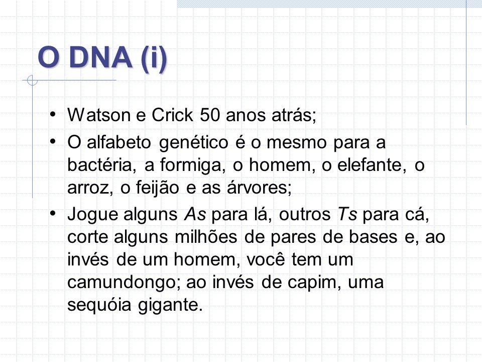 O DNA (i) Watson e Crick 50 anos atrás; O alfabeto genético é o mesmo para a bactéria, a formiga, o homem, o elefante, o arroz, o feijão e as árvores; Jogue alguns As para lá, outros Ts para cá, corte alguns milhões de pares de bases e, ao invés de um homem, você tem um camundongo; ao invés de capim, uma sequóia gigante.