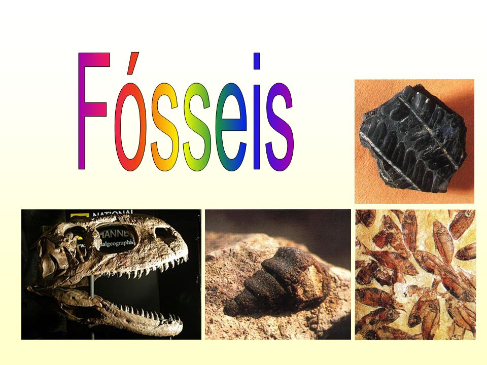 Fósseis restos de organismos: - ossos - dentes - troncos - chifres - etc.