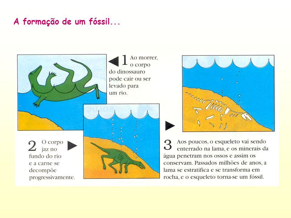 A formação de um fóssil...