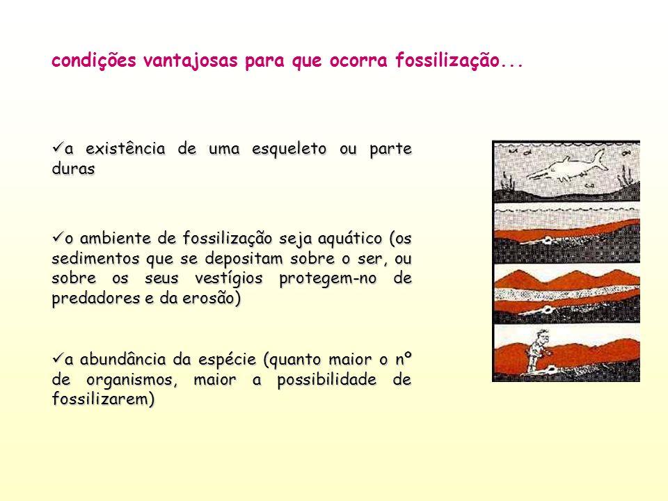 o ambiente de fossilização seja aquático (os sedimentos que se depositam sobre o ser, ou sobre os seus vestígios protegem-no de predadores e da erosão
