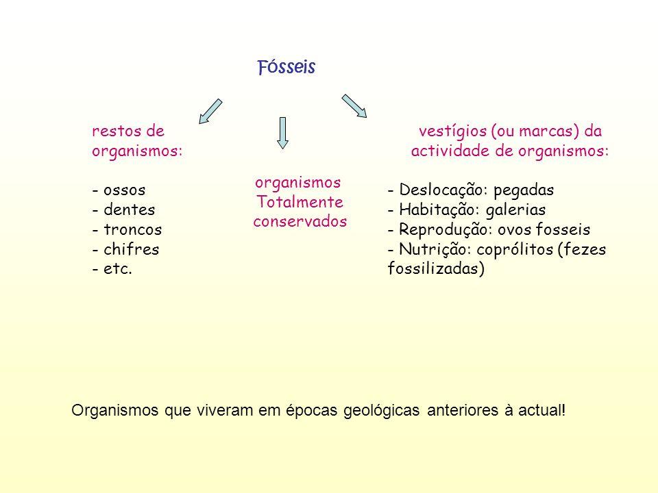 Fósseis restos de organismos: - ossos - dentes - troncos - chifres - etc. vestígios (ou marcas) da actividade de organismos: - Deslocação: pegadas - H