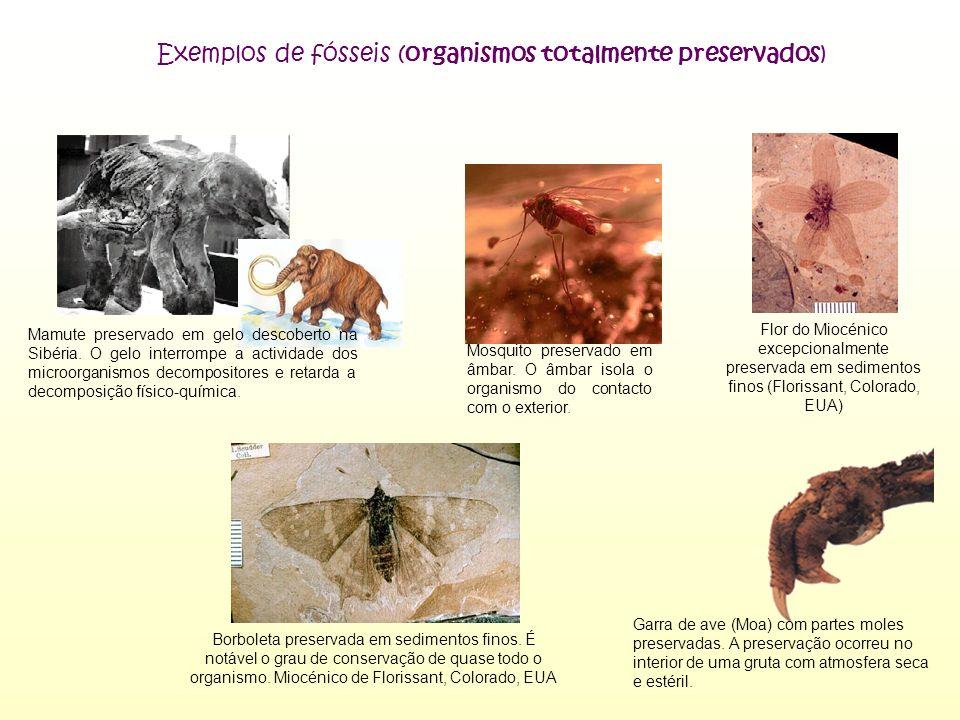 Garra de ave (Moa) com partes moles preservadas. A preservação ocorreu no interior de uma gruta com atmosfera seca e estéril. Mamute preservado em gel