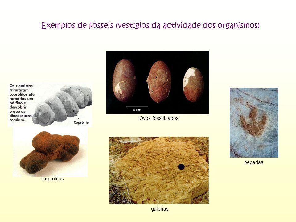 Processos/Tipos de Fossilização MOLDAGEM MINERALIZAÇÃO MUMIFICAÇÃO OU CONSERVAÇÃO TOTAL Consiste na cópia da forma interna ou externa de um resto orgânico Consiste na substituição da matéria que constituía o organismo, por certos minerais que o petrificam, mas mantêm-se as suas características Consiste na conservação total de um organismo, por ter sido envolvido, de imediato, por uma substância que impede a sua decomposição