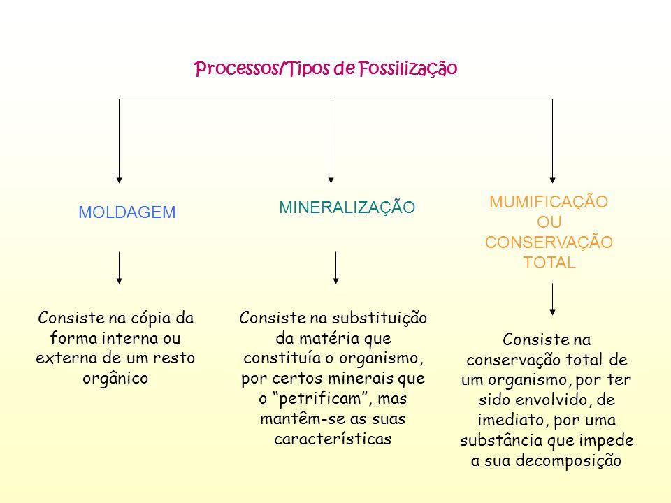 Processos/Tipos de Fossilização MOLDAGEM MINERALIZAÇÃO MUMIFICAÇÃO OU CONSERVAÇÃO TOTAL Consiste na cópia da forma interna ou externa de um resto orgâ