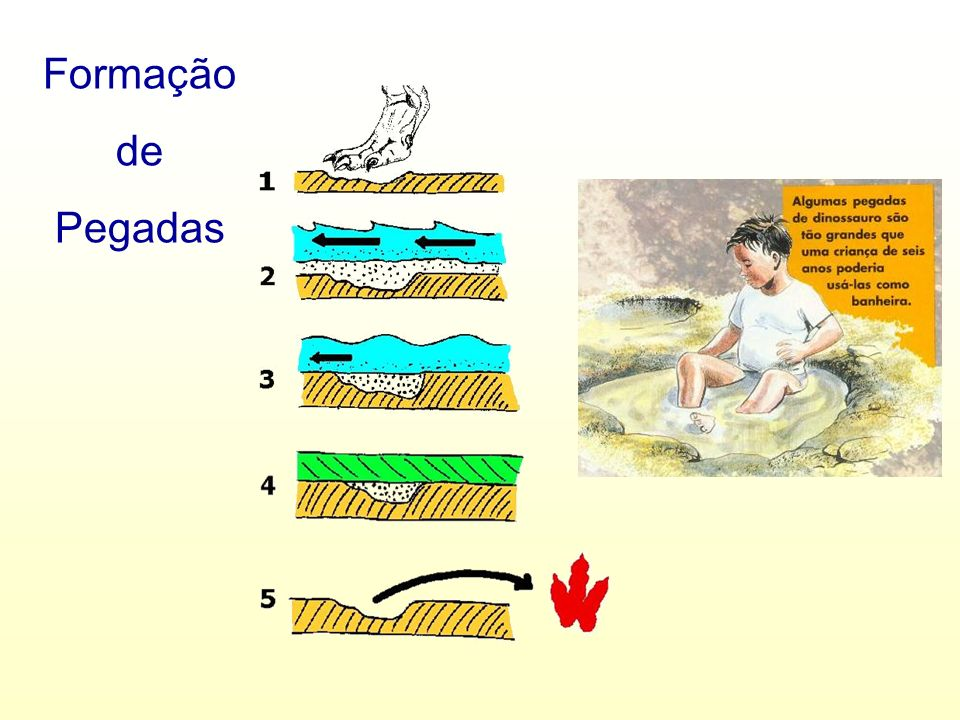 A Ciência que estuda os fósseis é a Paleontologia [nome que deriva do grego palaios (antigo)+ontos (ser)+logos (tratado)].