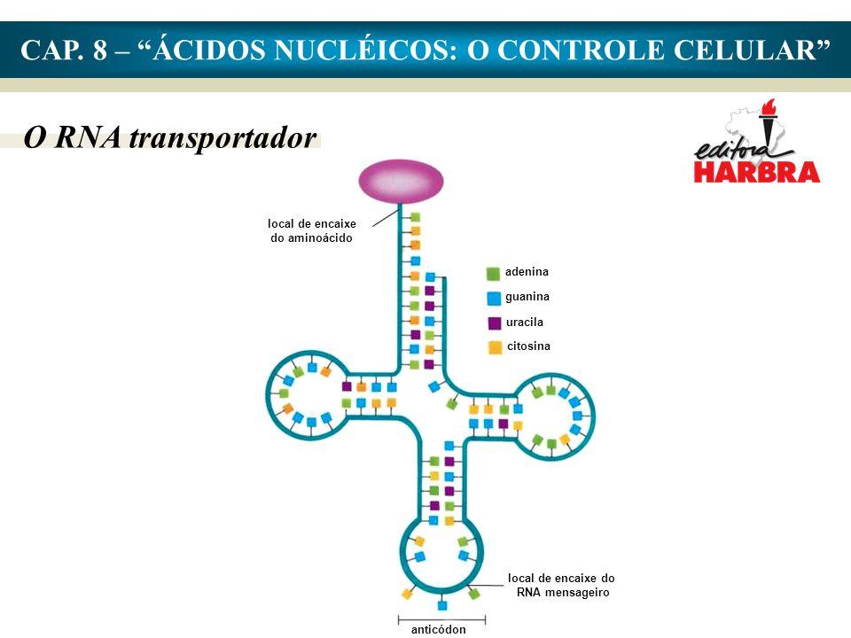 local de encaixe do aminoácido local de encaixe do RNA mensageiro anticódon adenina guanina uracila citosina CAP.