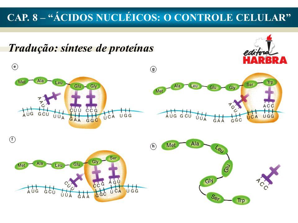 CAP. 8 – ÁCIDOS NUCLÉICOS: O CONTROLE CELULAR Tradução: síntese de proteínas ee f gg hh