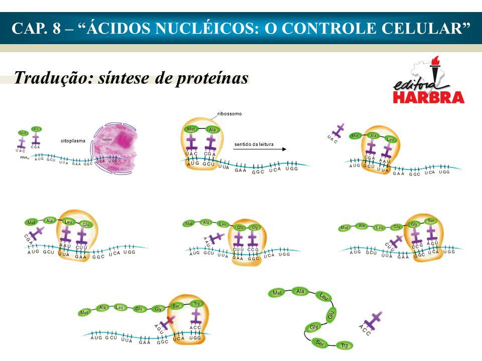 CAP. 8 – ÁCIDOS NUCLÉICOS: O CONTROLE CELULAR Tradução: síntese de proteínas ribossomo sentido da leitura citoplasma