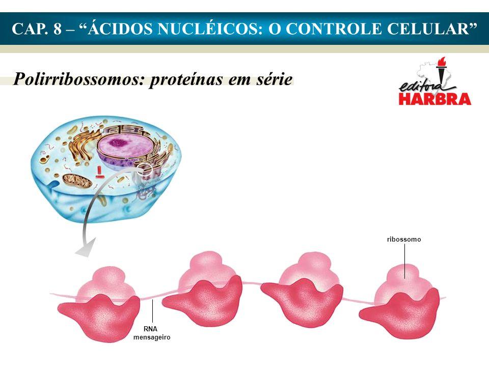 CAP. 8 – ÁCIDOS NUCLÉICOS: O CONTROLE CELULAR Polirribossomos: proteínas em série RNA mensageiro ribossomo