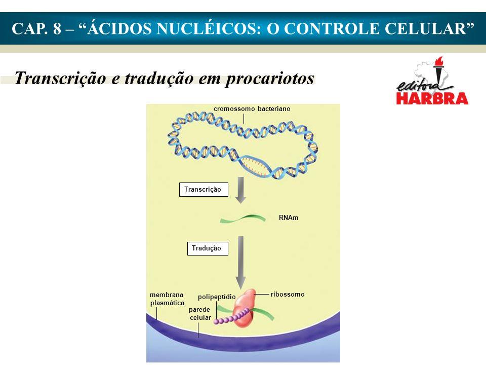 CAP. 8 – ÁCIDOS NUCLÉICOS: O CONTROLE CELULAR Transcrição e tradução em procariotos cromossomo bacteriano Transcrição RNAm Tradução membrana plasmátic