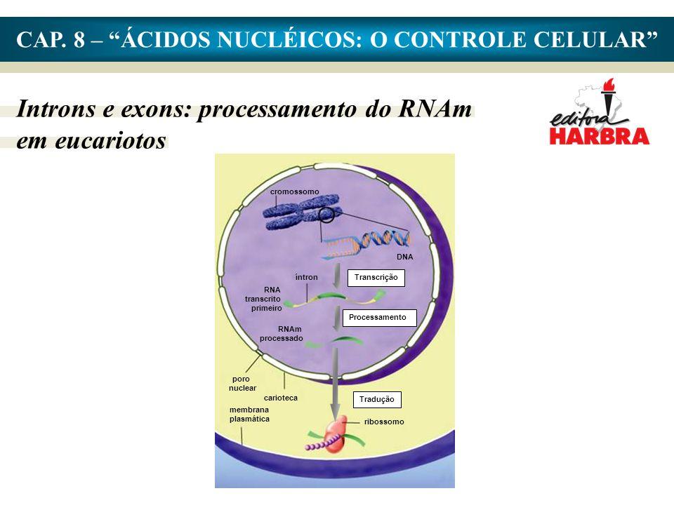 CAP. 8 – ÁCIDOS NUCLÉICOS: O CONTROLE CELULAR Introns e exons: processamento do RNAm em eucariotos cromossomo DNA Transcrição íntron RNA transcrito pr