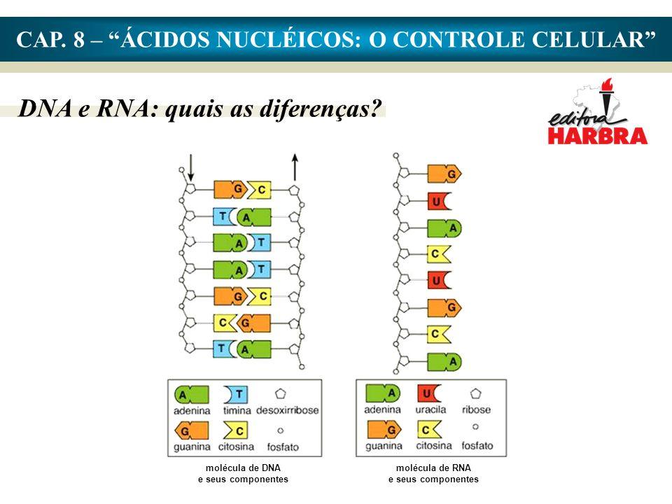 CAP.8 – ÁCIDOS NUCLÉICOS: O CONTROLE CELULAR DNA e RNA: quais as diferenças.