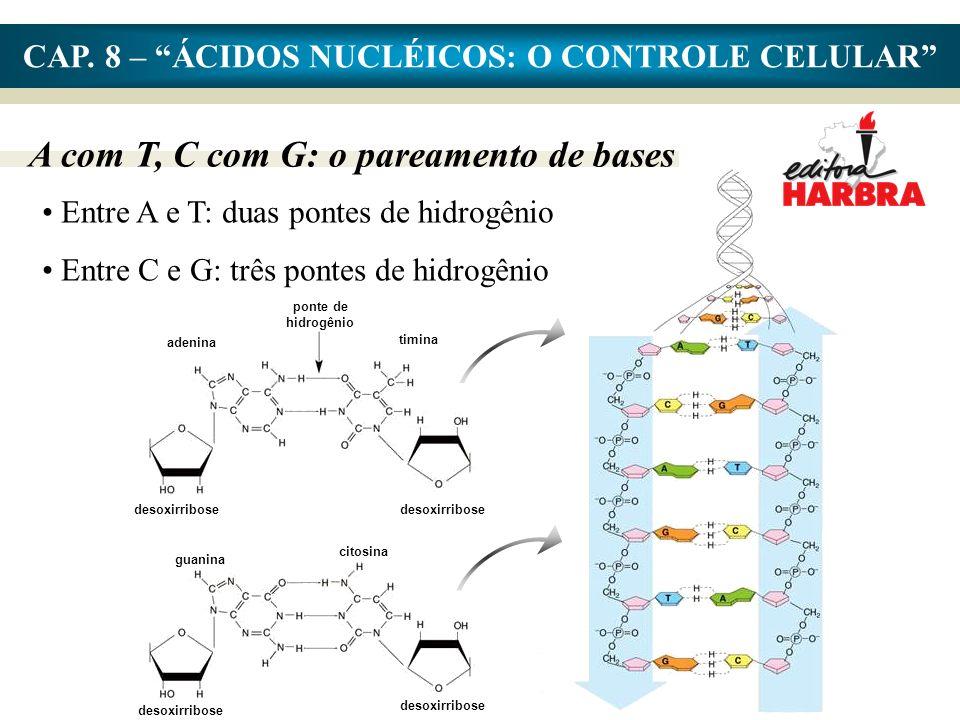 CAP. 8 – ÁCIDOS NUCLÉICOS: O CONTROLE CELULAR A com T, C com G: o pareamento de bases ponte de hidrogênio timina adenina desoxirribose guanina citosin