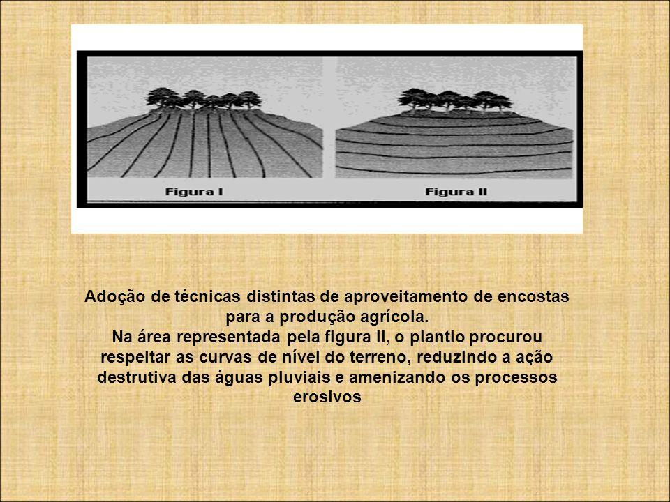 Adoção de técnicas distintas de aproveitamento de encostas para a produção agrícola. Na área representada pela figura II, o plantio procurou respeitar