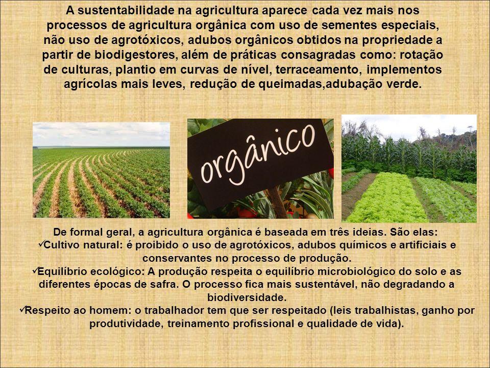 A sustentabilidade na agricultura aparece cada vez mais nos processos de agricultura orgânica com uso de sementes especiais, não uso de agrotóxicos, a