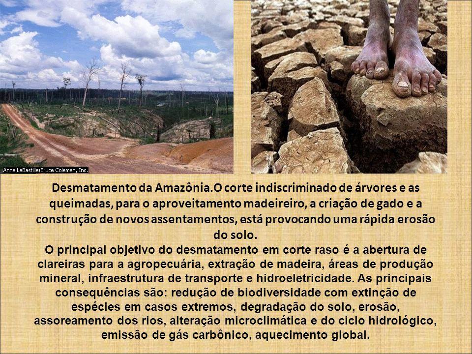 Desmatamento da Amazônia.O corte indiscriminado de árvores e as queimadas, para o aproveitamento madeireiro, a criação de gado e a construção de novos