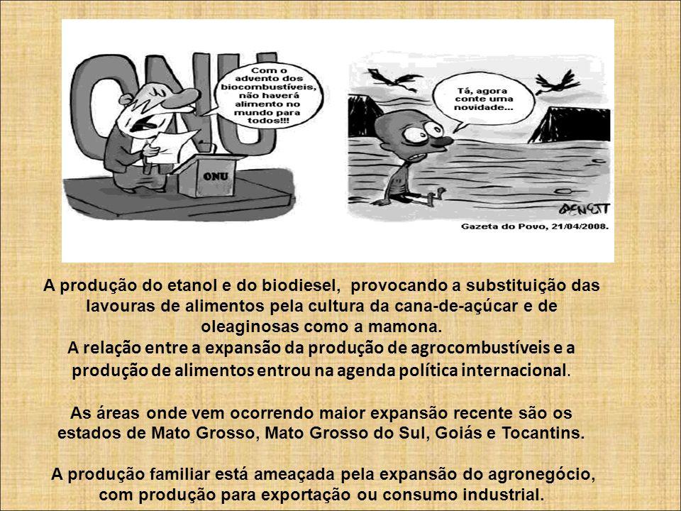 A produção do etanol e do biodiesel, provocando a substituição das lavouras de alimentos pela cultura da cana-de-açúcar e de oleaginosas como a mamona