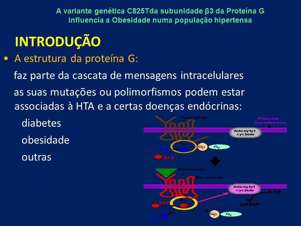 A estrutura da proteína G: faz parte da cascata de mensagens intracelulares as suas mutações ou polimorfismos podem estar associadas à HTA e a certas doenças endócrinas: diabetes obesidade outras INTRODUÇÃO A variante genética C825Tda subunidade β3 da Proteína G influencia a Obesidade numa população hipertensa