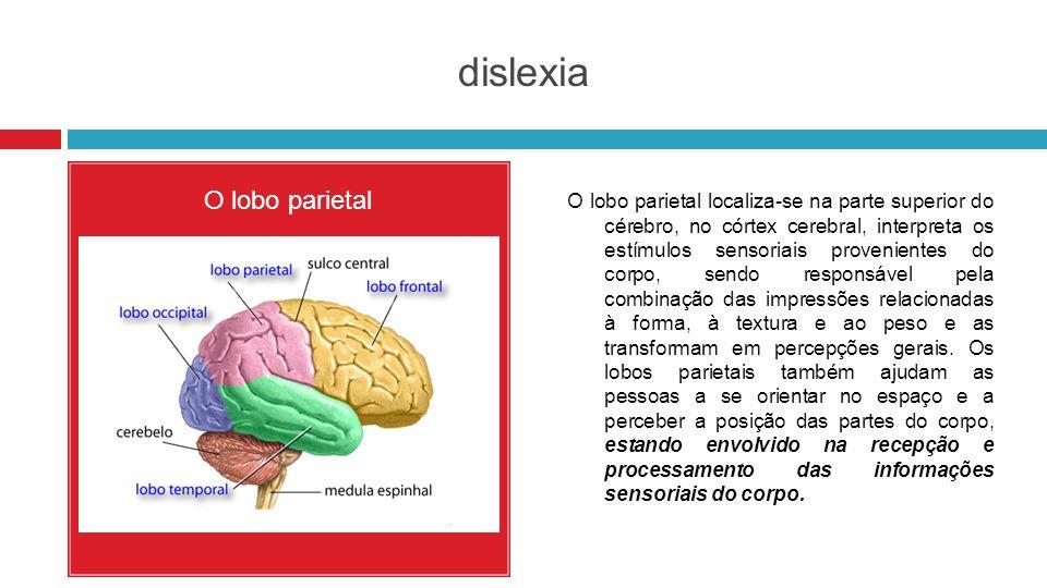 dislexia O lobo parietal O lobo parietal localiza-se na parte superior do cérebro, no córtex cerebral, interpreta os estímulos sensoriais provenientes