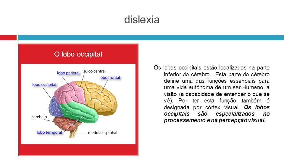 dislexia O lobo occipital Os lobos occipitais estão localizados na parte inferior do cérebro. Esta parte do cérebro define uma das funções essenciais