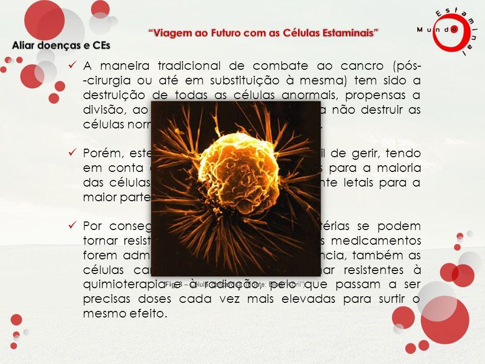 Uma das maiores promessas para o futuro, é a possível cura de VIH com células estaminais.