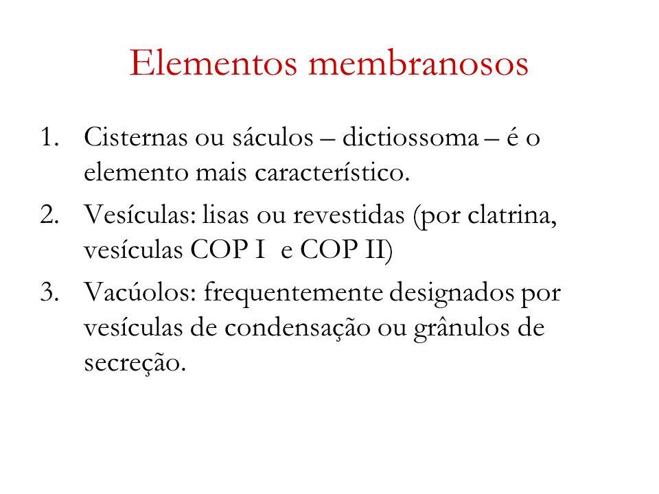 Elementos membranosos 1.Cisternas ou sáculos – dictiossoma – é o elemento mais característico. 2.Vesículas: lisas ou revestidas (por clatrina, vesícul