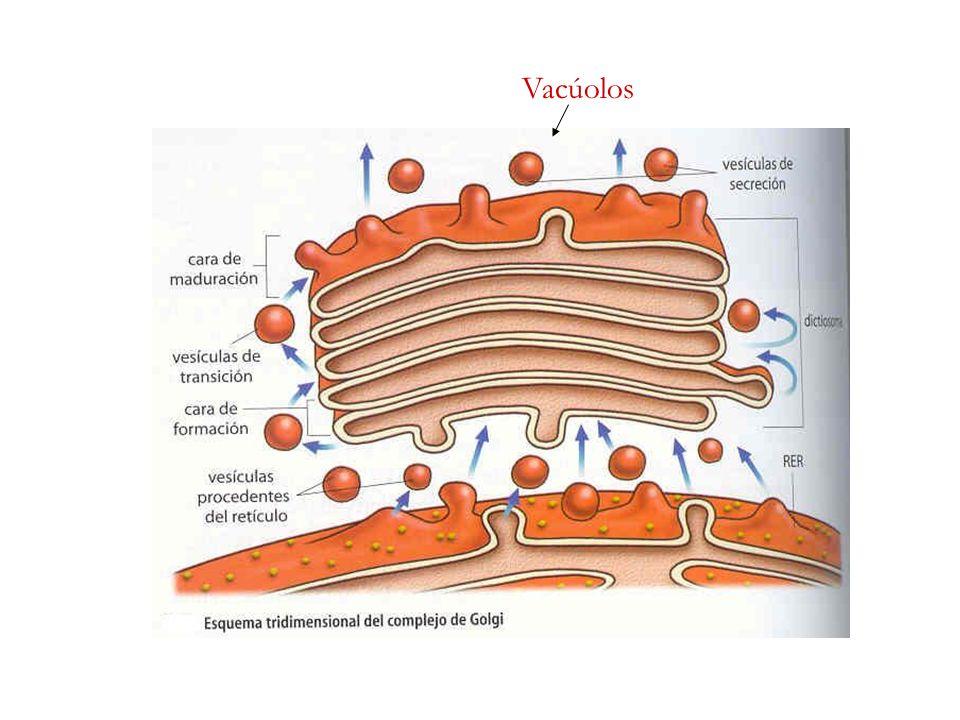 Resulta da alteração do metabolismo das purinas que provoca um aumento excessivo de ácido úrico no plasma.