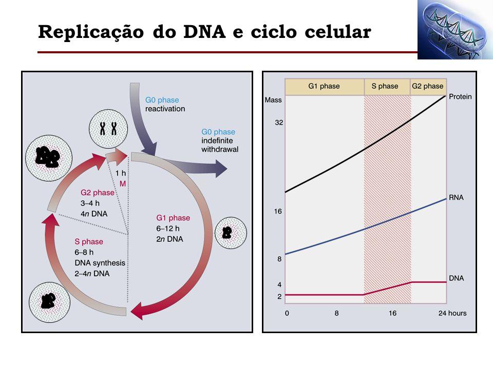 Replicação do DNA e ciclo celular
