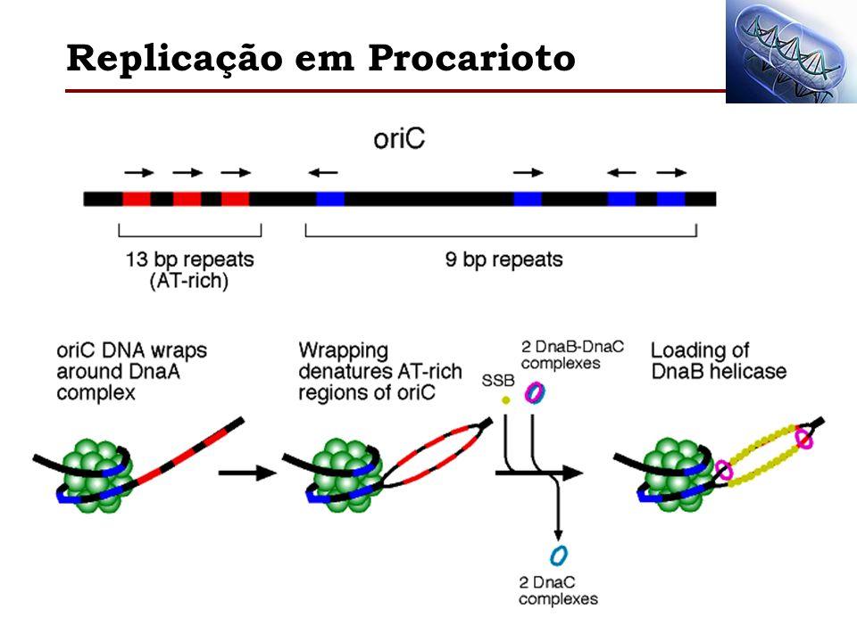 Replicação em Procarioto