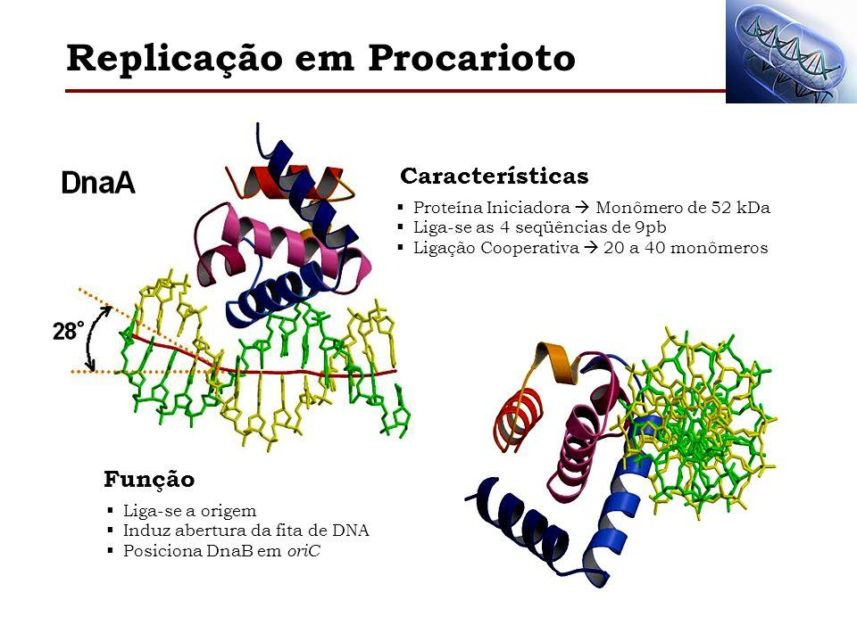 Proteína Iniciadora Monômero de 52 kDa Liga-se as 4 seqüências de 9pb Ligação Cooperativa 20 a 40 monômeros Características Liga-se a origem Induz abe
