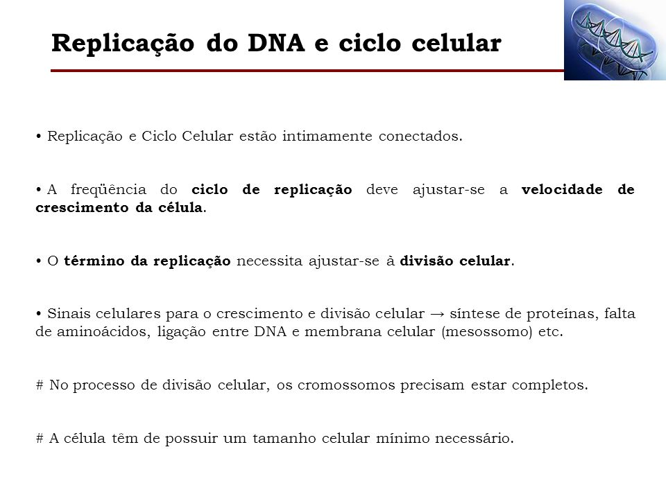 Replicação do DNA e ciclo celular Replicação e Ciclo Celular estão intimamente conectados. A freqüência do ciclo de replicação deve ajustar-se a veloc