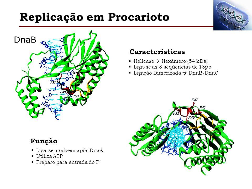 Replicação em Procarioto Helicase Hexâmero (54 kDa) Liga-se as 3 seqüências de 13pb Ligação Dimerizada DnaB-DnaC Características Liga-se a origem após