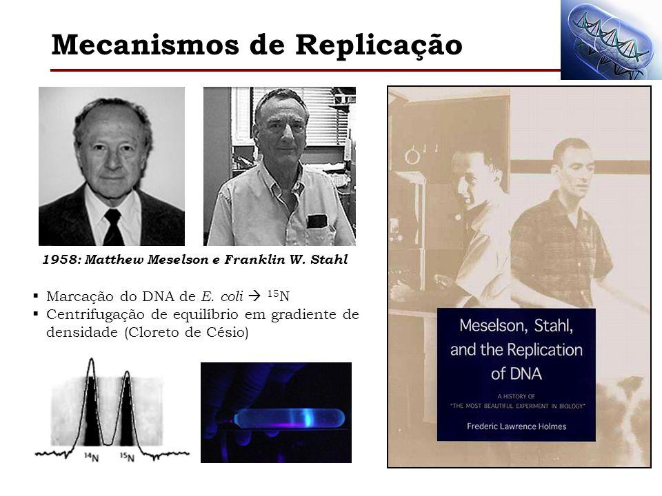 Mecanismos de Replicação 1958: Matthew Meselson e Franklin W. Stahl Marcação do DNA de E. coli 15 N Centrifugação de equilíbrio em gradiente de densid