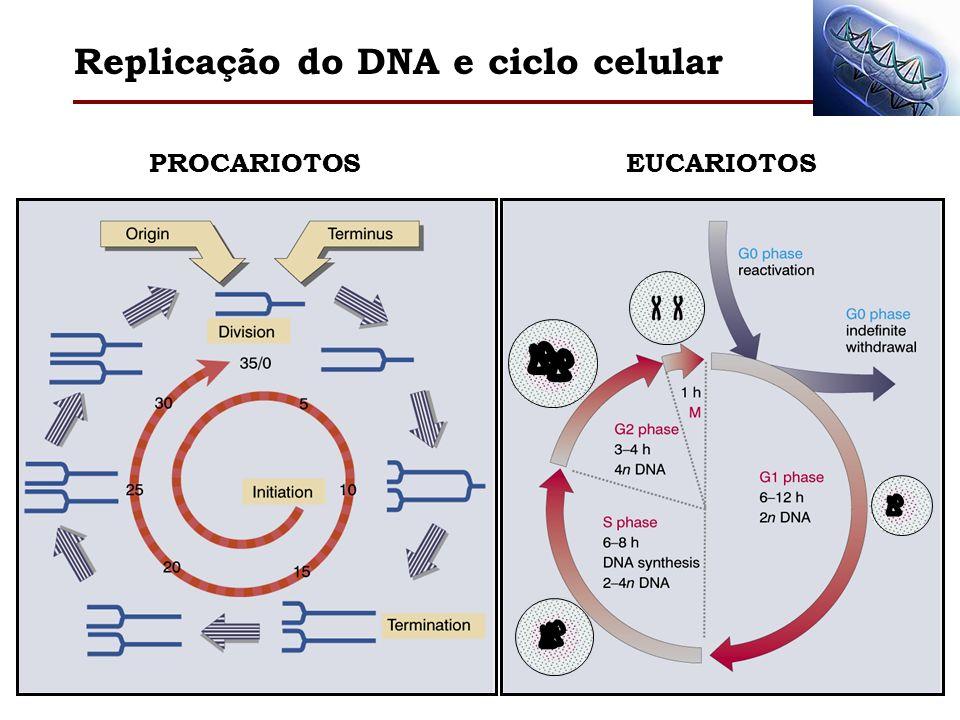 Replicação do DNA e ciclo celular # Pontos-chave na relação entre replicação e ciclo celular momento em que o processo de duplicação do cromossomo deve ser iniciado.