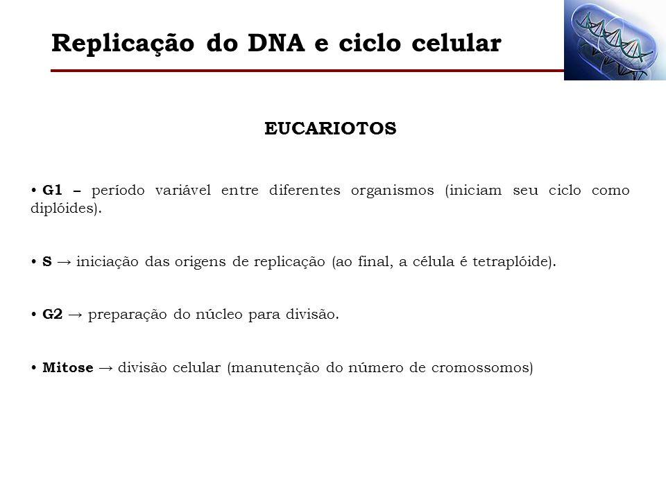 Replicação do DNA e ciclo celular EUCARIOTOS G1 – período variável entre diferentes organismos (iniciam seu ciclo como diplóides). S iniciação das ori