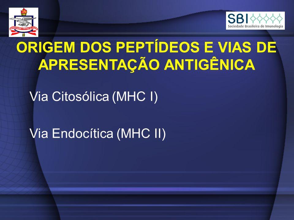 ORIGEM DOS PEPTÍDEOS E VIAS DE APRESENTAÇÃO ANTIGÊNICA Via Endocítica (MHC II) Via Citosólica (MHC I)