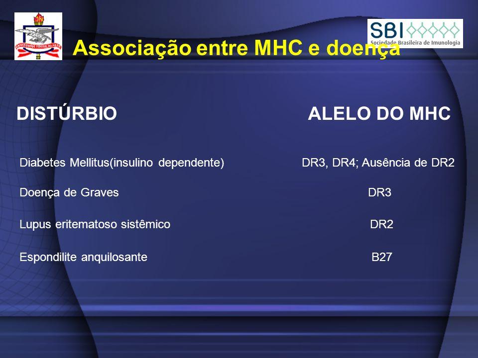 DISTÚRBIO ALELO DO MHC Associação entre MHC e doença Diabetes Mellitus(insulino dependente) DR3, DR4; Ausência de DR2 Doença de Graves DR3 Lupus eritematoso sistêmico DR2 Espondilite anquilosante B27