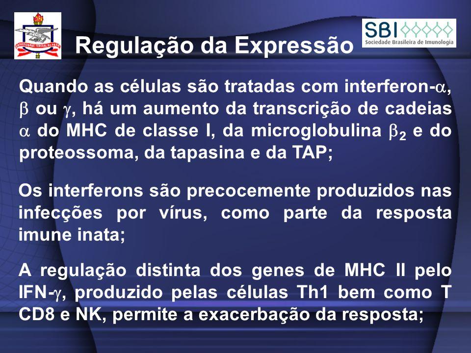 Quando as células são tratadas com interferon-, ou, há um aumento da transcrição de cadeias do MHC de classe I, da microglobulina 2 e do proteossoma, da tapasina e da TAP; Regulação da Expressão Os interferons são precocemente produzidos nas infecções por vírus, como parte da resposta imune inata; A regulação distinta dos genes de MHC II pelo IFN-, produzido pelas células Th1 bem como T CD8 e NK, permite a exacerbação da resposta;