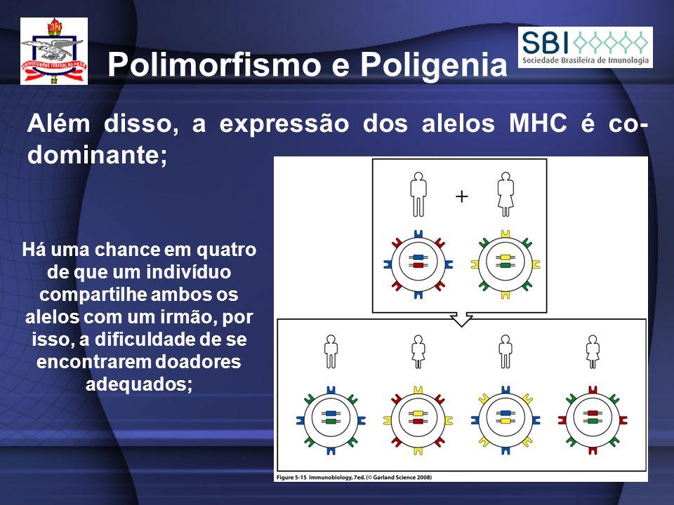 Polimorfismo e Poligenia Além disso, a expressão dos alelos MHC é co- dominante; Há uma chance em quatro de que um indivíduo compartilhe ambos os alelos com um irmão, por isso, a dificuldade de se encontrarem doadores adequados;